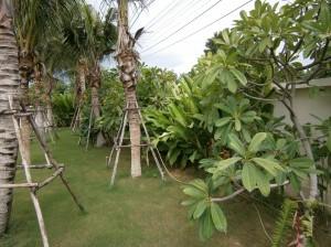 Jonge palmbomen